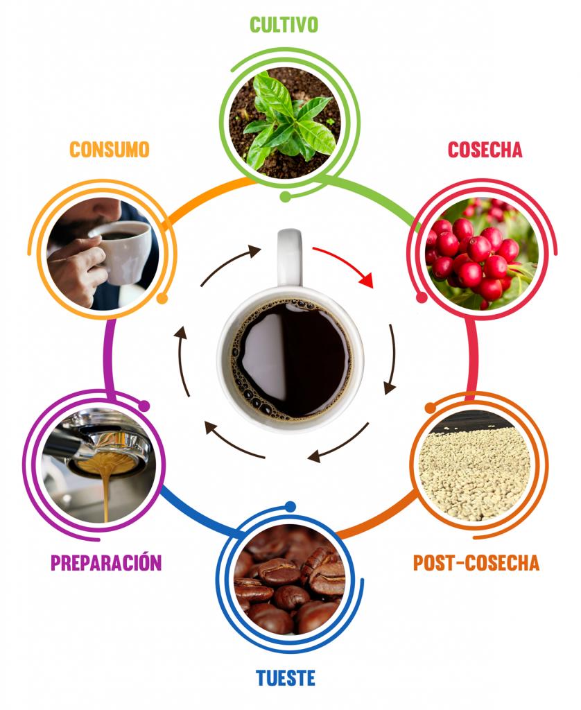 Ejemplo del proceso de un grano de café